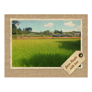 Rice Field Green Stalks Morning Blue Sky Clouds Postcard