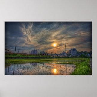 Rice Field Sunset Poster