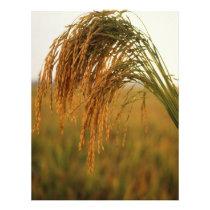 Rice Flyer