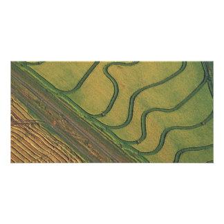 Rice harvesting photo card