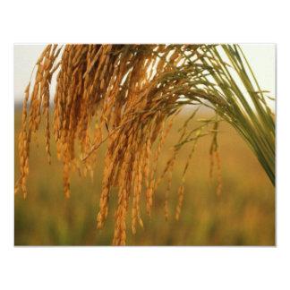 Rice 4.25x5.5 Paper Invitation Card