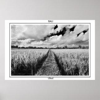 Rice paddies in Ubud, Bali Poster