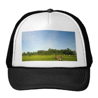 Rice paddy field in Bali Trucker Hats
