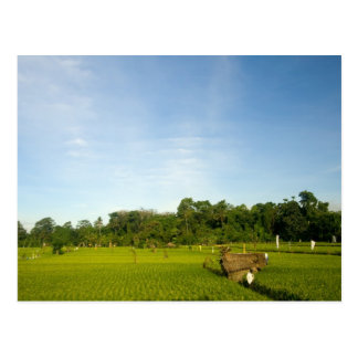 Rice paddy field in Bali Post Card