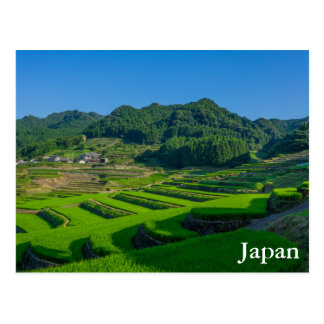 Rice Paddy Field in Japan Postcard