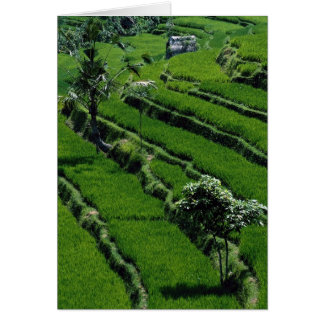 Rice paddy fields, Bali, Indonesia Card