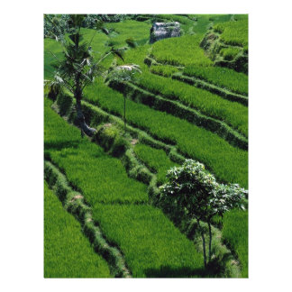 Rice paddy fields, Bali, Indonesia Personalized Flyer