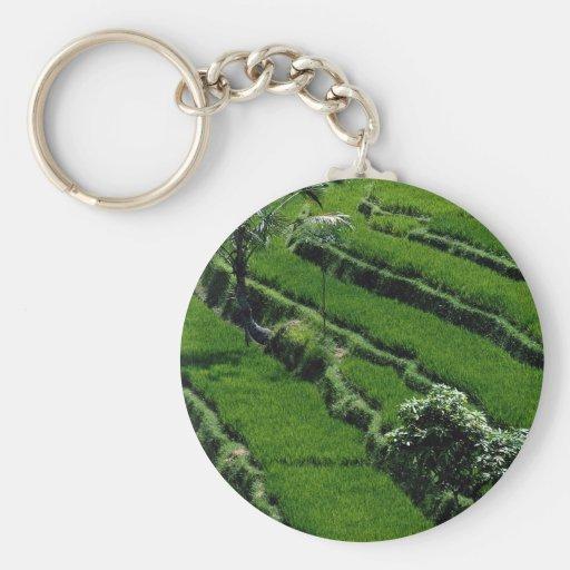 Rice paddy fields, Bali, Indonesia Basic Round Button Keychain