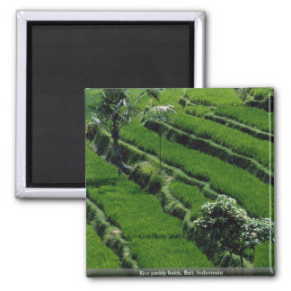 Rice paddy fields, Bali, Indonesia 2 Inch Square Magnet