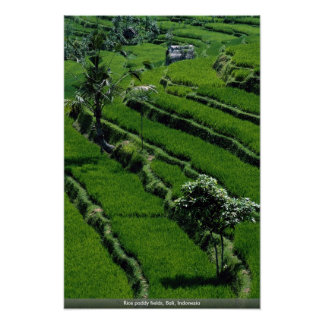 Rice paddy fields, Bali, Indonesia Poster