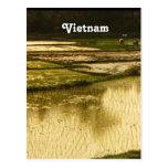 Rice Paddy Postcard