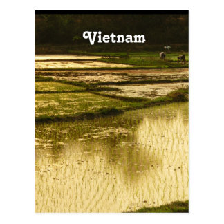 Rice Paddy Post Card