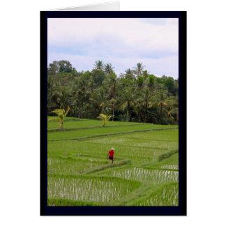 Rice Paddys Ubud Bali Card