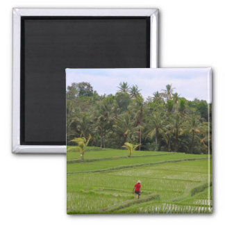 Rice Paddys Ubud Bali 2 Inch Square Magnet