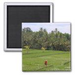 Rice Paddys Ubud Bali Magnets
