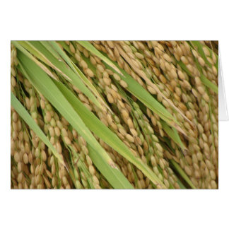Rice ready to be harvested card