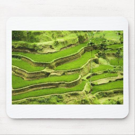 Rice terrace in Bali Mouse Pad