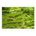Rice terrace in Bali Post Card