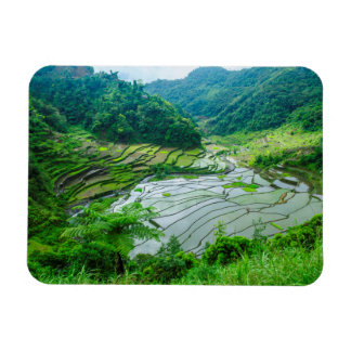 Rice terrace landscape, Philippines Magnet