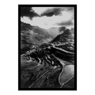 Rice Terrace Philippines 1898 Poster