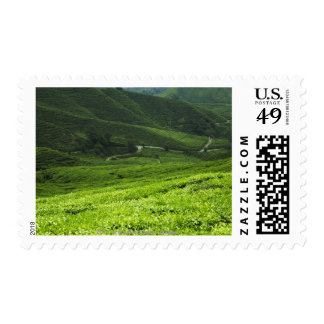 rice terraces postage