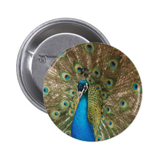 Rich Color Photo of Peacock Pinback Button