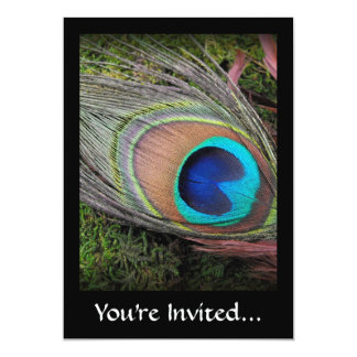 Rich, Elegant Peacock Feather Photograph Card