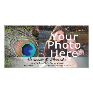 Rich Peacock Feather with Green Moss Photo Cards