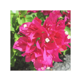 Rich Red Bougainvillea Canvas Print