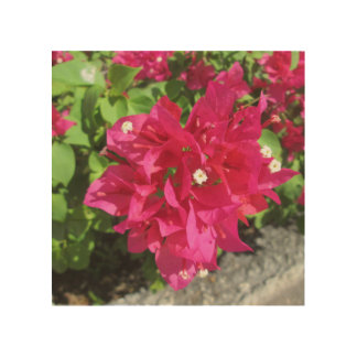 Rich Red Bougainvillea Wood Print
