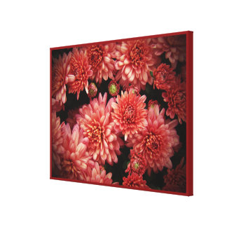 Rich Red Chrysanthemums Canvas Print
