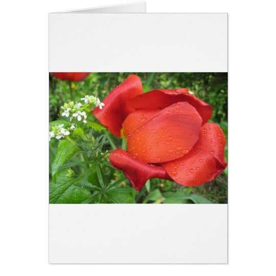 Rich red tulip and sweet white card