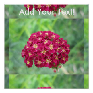 Rich Red Yarrow Flower Poster