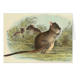 Richard Lydekker - Brush-Tailed Rat-Kangaroo Card