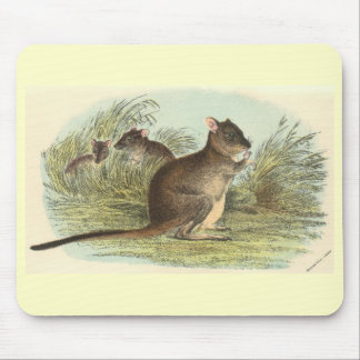 Richard Lydekker - Brush-Tailed Rat-Kangaroo Mouse Pad