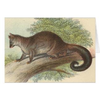 Richard Lydekker - Common Phalanger/Possum Greeting Card