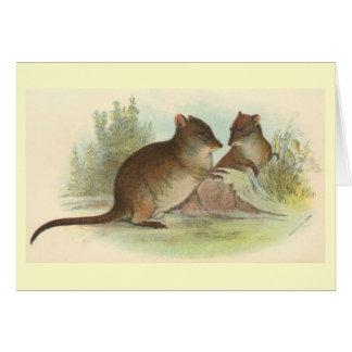 Richard Lydekker - Common Rat-Kangaroo Card