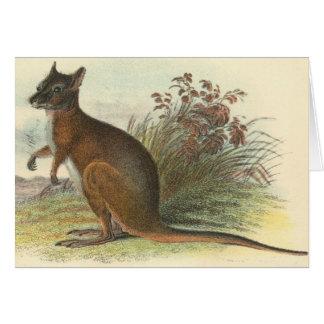 Richard Lydekker - Dama Wallaby Card