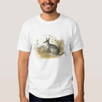Richard Lydekker - Rabbit Bandicoot - Bilby T-shirt