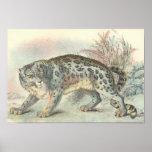 Richard Lydekker - Snow Leopard Portfolio Posters