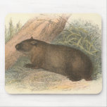 Richard Lydekker - Wombat tasmano Tapete De Ratón