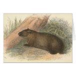 Richard Lydekker - Wombat tasmano Tarjeta De Felicitación
