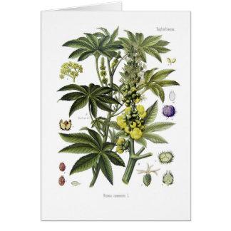 Ricinus communis (Castor Oil Plant) Card