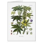 Ricinus communis (ricino) tarjeta de felicitación