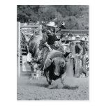 Rider hanging on to bucking bull postcard