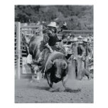 Rider hanging on to bucking bull poster