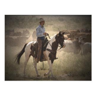 Rider on the Range Postcard