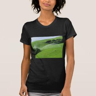 Ridge en pasto alpino con las regaderas de la camisas