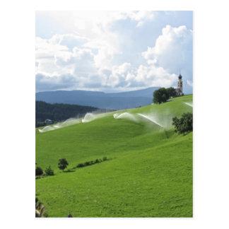 Ridge en pasto alpino con las regaderas de la postales