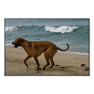 Ridgeback by the Sea Posters